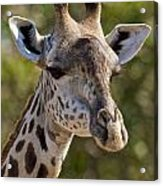 I'm All Ears - Giraffe Acrylic Print