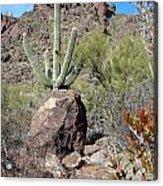 In Alamo Canyon Acrylic Print
