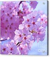 In Bloom Acrylic Print