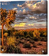 In The Golden Hour  Acrylic Print