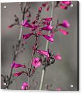 Into The Flower Acrylic Print
