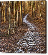 Into The Forest Acrylic Print