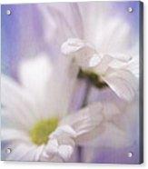 Iris Daisy Acrylic Print