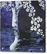 Japanese Cherry Blossom Acrylic Print