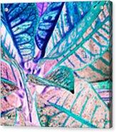 Jive  Acrylic Print
