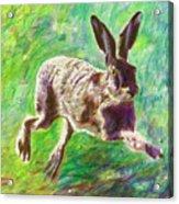 Joyful Hare Acrylic Print