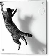 Jumping Cat Acrylic Print