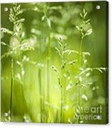 June Green Grass Flowering Acrylic Print by Elena Elisseeva