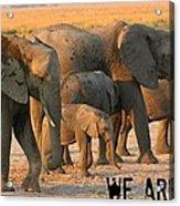 Kalahari Elephants Acrylic Print