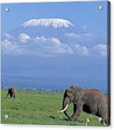 Kilimandjaro Acrylic Print
