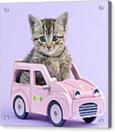 Kitten In Pink Car Acrylic Print