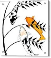 Koi Utsurimono Yellow Golden Ogon Bekko And Bamboo   Acrylic Print