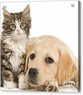Labrador And Forest Cat Acrylic Print