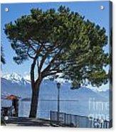 Lakeside With Trees Acrylic Print