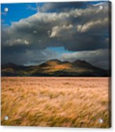 Landscape Of Windy Wheat Field In Front Of Mountain Range With D Acrylic Print