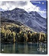 Larch Pine Reflections Acrylic Print