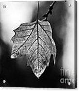 Last Standing Leaf Acrylic Print