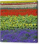 Lavender Farm, Furano, Hokkaido Acrylic Print