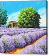 Lavender Lines Acrylic Print