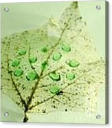 Leaf With Green Drops Acrylic Print