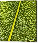 Leafy Details Acrylic Print