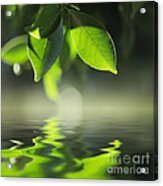 Leaves Over Water Acrylic Print