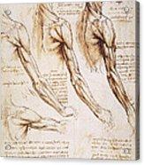Leonardo: Anatomy, 1510 Acrylic Print