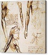 Leonardo: Anatomy, C1510 Acrylic Print