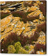 Lichened Rocks Acrylic Print