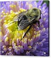 Light Nectar Acrylic Print