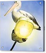 Light Pelican Acrylic Print