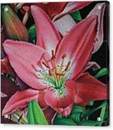 Lily's Garden Acrylic Print