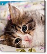 Little Cat Kitten Acrylic Print