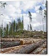 Logpile At A Clear Cut Area Acrylic Print