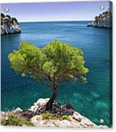 Lone Pine Tree Acrylic Print