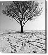 Lone Tree Winter Acrylic Print
