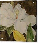 Longue Vue Magnolia Acrylic Print by Katie Spicuzza