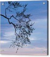 Low Angle View Of Tree At Dawn, Dark Acrylic Print