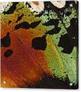 Madagascan Sunset Moth Wing Detail Acrylic Print