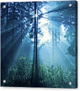 Magical Light Acrylic Print