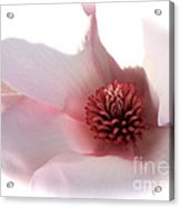 Magnolia Center Acrylic Print