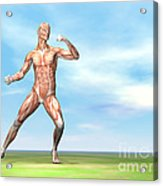 Male Musculature In Fighting Stance Acrylic Print
