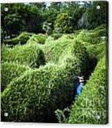 Man Lost Inside A Maze Or Labyrinth Acrylic Print