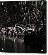 Mangrove Forest Of The Los Haitises National Park Dominican Republic Acrylic Print