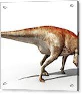 Mantellisaurus Dinosaur Acrylic Print