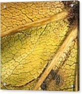 Maple Leaf Detail Acrylic Print