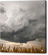 Marshmallow - Bubbling Storm Cloud Over Wheat In Kansas Acrylic Print