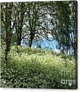 Meadow And Trees In Spring. Vitabergsparken, Stockholm, Sweden. Acrylic Print