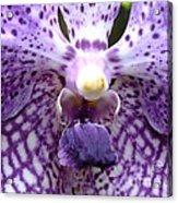 Micro Orchid Acrylic Print
