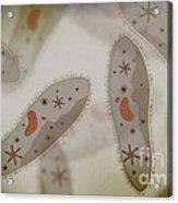 Microscopic View Of Paramecium Acrylic Print